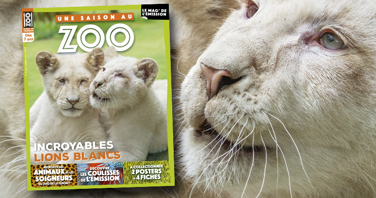 saison zoo magazine coulisse